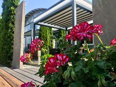Plants, Summer Garden, Winter Garden, Windows, Plant, Planets