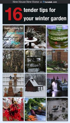 Ideas And Inspiration For Winter Gardening Can Be Found On My Hometalk  Board.