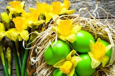 daffodils and easter eggs in nest spring easter background