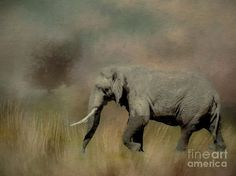 Sunrise on the Savannah by TL Wilson Photography features a digital painting made from a photograph of an African elephant ambling through the grasses in the early morning light.