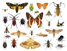 Insects are part of the living world, they provide a balance to the food web. Beautiful gardens are not devoid of insects, beneficial insects control pests. Keep beneficial insects the natural way. White Background Images, Background S, Piercings, Insect Photos, Botanical Tattoo, Beneficial Insects, Bugs And Insects, Pictures Images, Learn To Draw