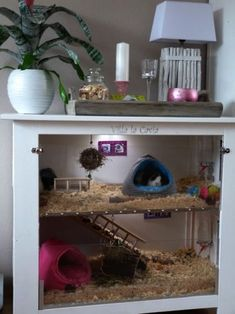 Guinea pigs - the perfect pet! Guinea pig cage from repurposed dresser Cage Hamster, Diy Guinea Pig Cage, Hedgehog Cage, Guinea Pig Hutch, Guinea Pig House, Pet Guinea Pigs, Guinea Pig Care, Pet Cage, Diy Hamster House