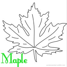 maple leaf coloring page to print from our nature coloring pages