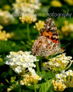 Butterfly on a bloom, flowers, spring, morning light, nature photography