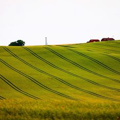 • Prints at WWW.FOTOKUNSTNER.NO ----------------------------------------------------------- Lovely Danish fields bathed in warm evening light #travel #traveling #traveler #travelgram #travelingram #instatravel #nature #paradise #igers #igersoftheday #loveit #tflers #tfl #explore #amazing #beautiful #tweegram #webstagram #bestoftheday #tourist #igtravel #trip #instagood #instacool #instagramhub #field #denmark #green #yellow Danish, Denmark, Travel Photos, Fields, Golf Courses, Paradise, Traveling, Warm, Explore