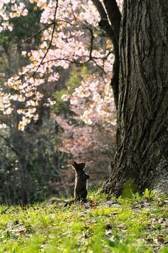 Mighty tree...little squirrel