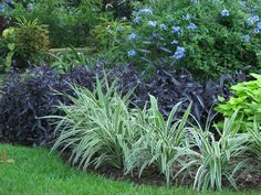 Get tips for enjoying a good looking Florida Gardening, surroundings, or front or back yard. Our experts let you know everything necessary to actually florida gardening flowers Houston Landscaping, Outdoor Landscaping, Outdoor Plants, Front Yard Landscaping, Florida Landscaping, Landscaping Plants, Landscaping Ideas, Florida Plants, Florida Gardening