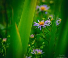 Peaceful isn't it? by Aziz Nasuti on 500px