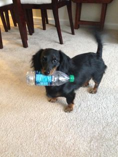 Water bottles have been banned in our house bc he thinks they're toys