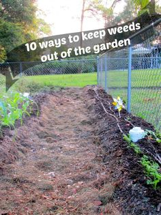 Keep Weeds Out Of Your Garden #gardening #petrashop Http://www.