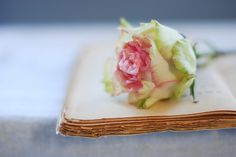 the consolation of roses in winter by Shawna Lemay, via Flickr