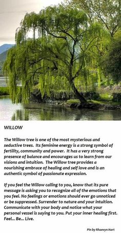 My favourite of all of the trees, there is a specific one within a Japanese themed garden by a lake that I visit regularly (visiting it today woop woop!) It grounds me like no other tree, feel so calm & soothed whilst around this particular tree...