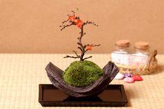 長寿梅盆栽 国産イブシカワラ鉢 チョウジュバイ 卓上盆栽 プレゼントにもピッタリな盆栽