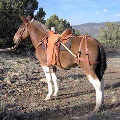 Horse Stalls, Horse Barns, Horse Tack, Breyer Horses, Mules Animal, Draft Mule, Horse Saddles, Western Saddles, Horse Halters