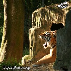 Has anyone made the coffee, yet? Www.BigCatRescue.org
