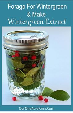 How to forage for wintergreen and use it to make an alcohol extract. Almanzo Wilder's mother did this in Farmer Boy!