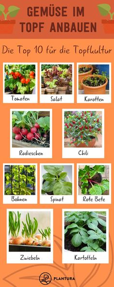 Garden Decor Growing vegetables in a pot: the top 10 for pot culture! Growing vegetables but not a garden? No problem! We present you 10 types of vegetables that you can plant in a pot! Types Of Vegetables, Planting Vegetables, Growing Vegetables, Growing Tomatoes, Growing Plants, Garden Types, Garden Care, Gardening For Beginners, Gardening Tips