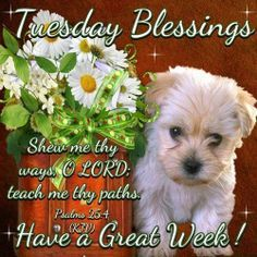 Tuesday Blessings Have A Great Week Tuesday Greetings, Good Morning Greetings, Good Morning Good Night, Good Morning Quotes, Morning Morning, 1611 King James Bible, Happy Tuesday Morning, Prayer Partner, Psalm 25