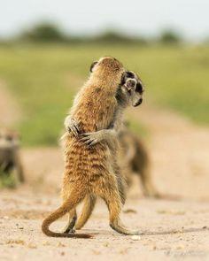 Animals, cute animals kissing, baby animals, animals and pets, mundo animal Wildlife Nature, Nature Animals, Animals And Pets, Baby Animals, Funny Animals, Cute Animals, Animals Kissing, Wild Animals, Animals Information