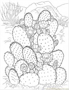 flower Page Printable Coloring Sheets | Coloring Pages Cactus 3 (Natural World > Flowers) - free printable ...