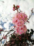 Eu estou compartilhando a imagem de  Neide Cavalcante.Leve sua câmera onde você for, tire uma foto que mostre a Primavera e concorra a um sensacional iPad 3! Clique para participar!