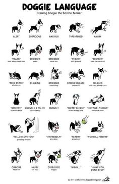 Read your dog's body language. | 38 Brilliant Hacks For Dog Owners