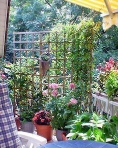 Un treillis est une belle façon d'ajouter de l'intimité et les plantes l'adore.