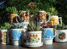 vintage/retro/unused cups = succulent garden.