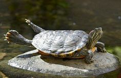 His destiny? To flap his embryonic wings and soar into infinity and beyond - into a new life as . . . a Turtle-Dove!