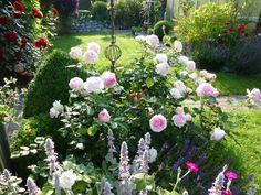die Rose Eden im frühen Morgenlicht... - Bilder und Fotos