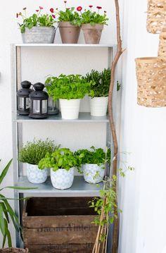 Ikea Hyllis Regal Balkon, plus Kräuter und andere Pflanzen