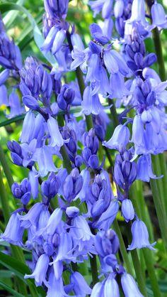 Knockpatrick Gardens a jewel in the County Limerick Crown Farmhouse Garden, Beautiful Gardens, Irish, Flowers, Plants, Irish Language, Plant, Ireland, Royal Icing Flowers