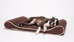 Restology by Precious Tails 100% Memory Foam Orthopedic Brown Contoured Lounger Pet Bed Mat Medium >>> You can find more details by visiting the image link.