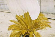 Inspirations - Forget Me Not prints, Pattern design studio Cactus Plante, Plant Drawing, Grafik Design, Mellow Yellow, Creative Studio, Botany, Color Combos, Color Inspiration, Planting Flowers