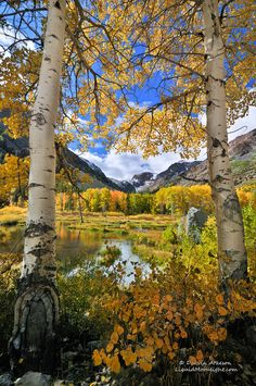 """""""Fall Color in the High Sierra Nevada"""" Yosemite. Photo by Darvin Atkeson. http://papasteves.com/blogs/news"""