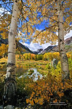 Fall Color in the High Sierra Nevada,California