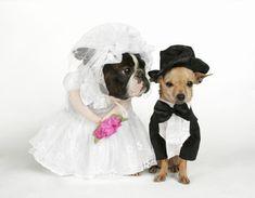 PET WEDDING DRESS/PEPIPETSHOP