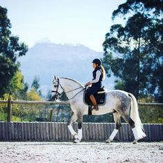 Kicked in the Head: The Equestrian Helmet Cute Horses, Pretty Horses, Horse Love, Beautiful Horses, Horse Photos, Horse Pictures, Arte Equina, Dressage Horses, English Riding