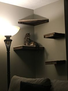 Set of 4 Floating Cat Shelves with corner shelf with Carpet - 1 rectangle, 2 squares, 1 corner OUR MOST POPULAR SET! Let your cat roam and lounge in style. Why buy an expensive kitty tree only t Floating Cat Shelves, Diy Cat Shelves, Corner Shelves, Floating House, Diy Cat Tree, Cat Perch, Cat Playground, Cat Room, Pet Furniture