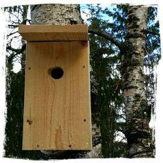 Mitt liv som Toril :o): Spennende fuglekasse oppdatering