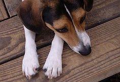 Behavior FAQ pages.  Hundreds of free articles on dog behavior & training.    Diamonds in the Ruff - Spokane, WA