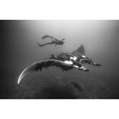 Bluue Space — An incredible day of diving with a friendly...