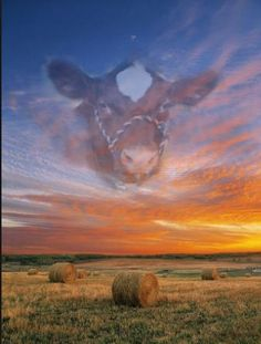 I have to believe there is a show cattle heaven Showing Livestock, Showing Cattle, Show Cattle Barn, Farm Animals, Cute Animals, Cow Quotes, Show Cows, Show Steers, Livestock Farming