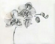Gray and Black Shades/Orchids