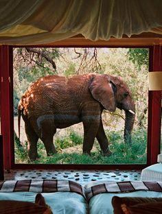 Makanyane Safari Lodge in Madikwe Game Reserve, South Africa