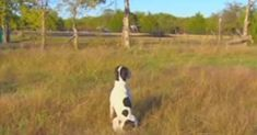 Loyal Dog Waits Every Day For Master Who Passed Away via LittleThings.com Get out the tissues....this is a heartbreaker