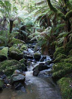 Creek, Sherbrooke Forest Dandenong Ranges, Victoria Australia photo by Reiner Richter
