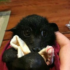 Yes, yes you can.   Can You Get Through This Post Without Admitting Bats Are Actually Kinda Cute?