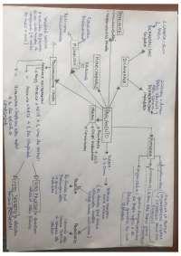 """Mappa concettuale """"il Parlamento """"Diritto Pubblico Comparato 5^ EDIZIONE , Schemi riassuntivi di Diritto Pubblico Comparato. Università degli Studi di Roma La Sapienza"""
