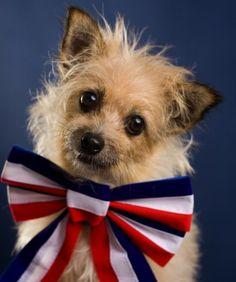 Patriotic Puppy-dog Eyes